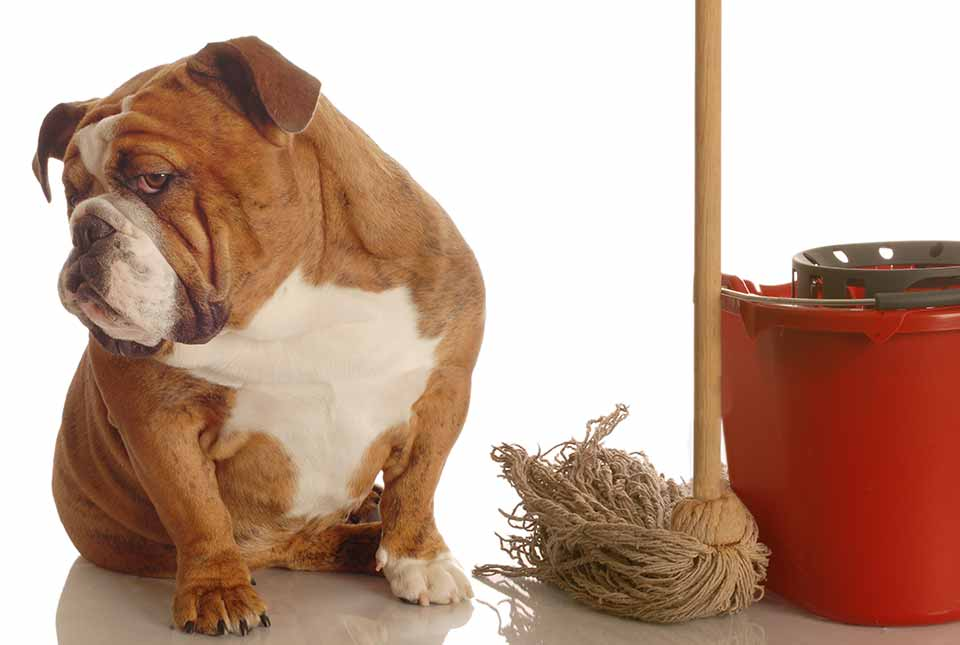 Dog Urine Stain Removal Tips