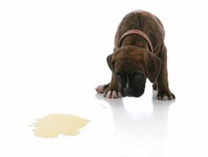 Dog Urine Remover