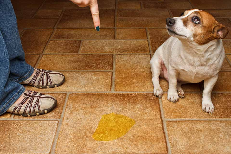 How to Get Rid of Dog Urine Smell